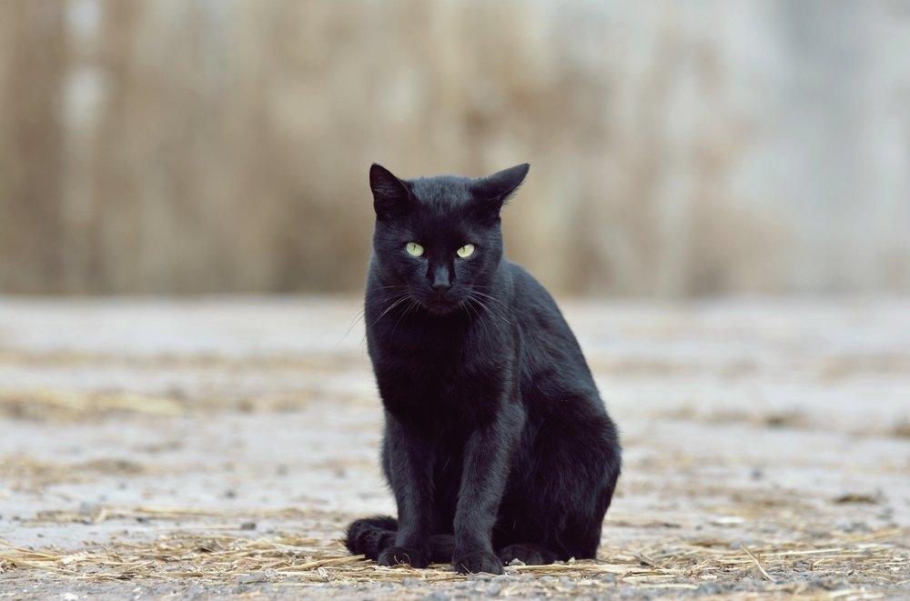 Профилактика укусов кошки и царапин