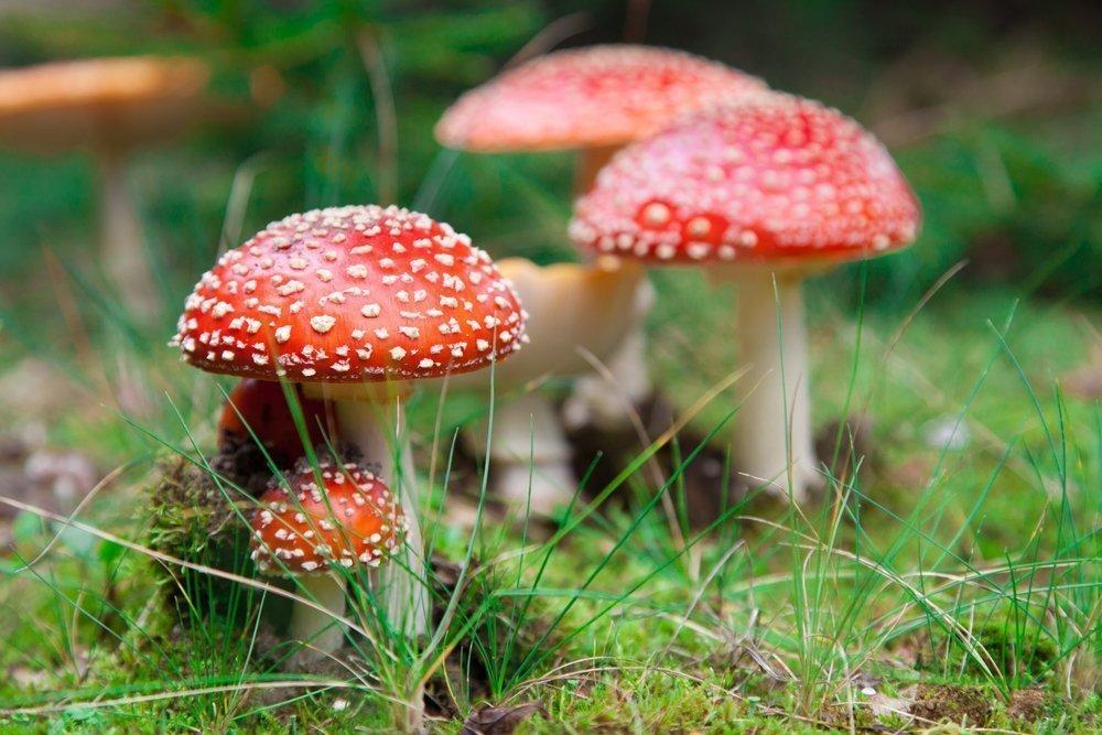 Ядовитые грибы — будьте аккуратны!