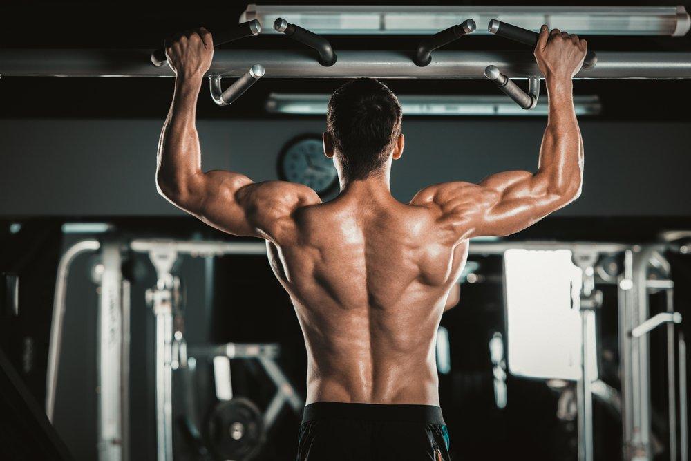 Какие мышцы работают при подтягивании?