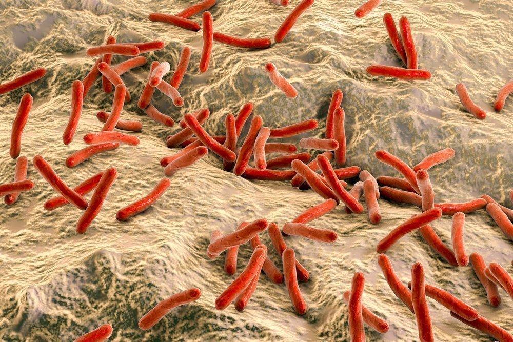 Проказа и бактерии, ее вызывающие