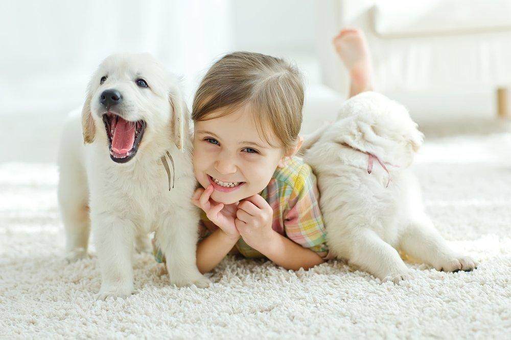 Какие породы собак хорошо ладят с детьми?