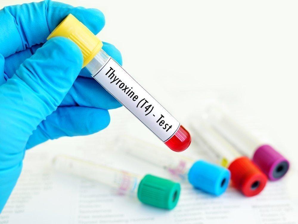 Щитовидная железа и ее гормоны