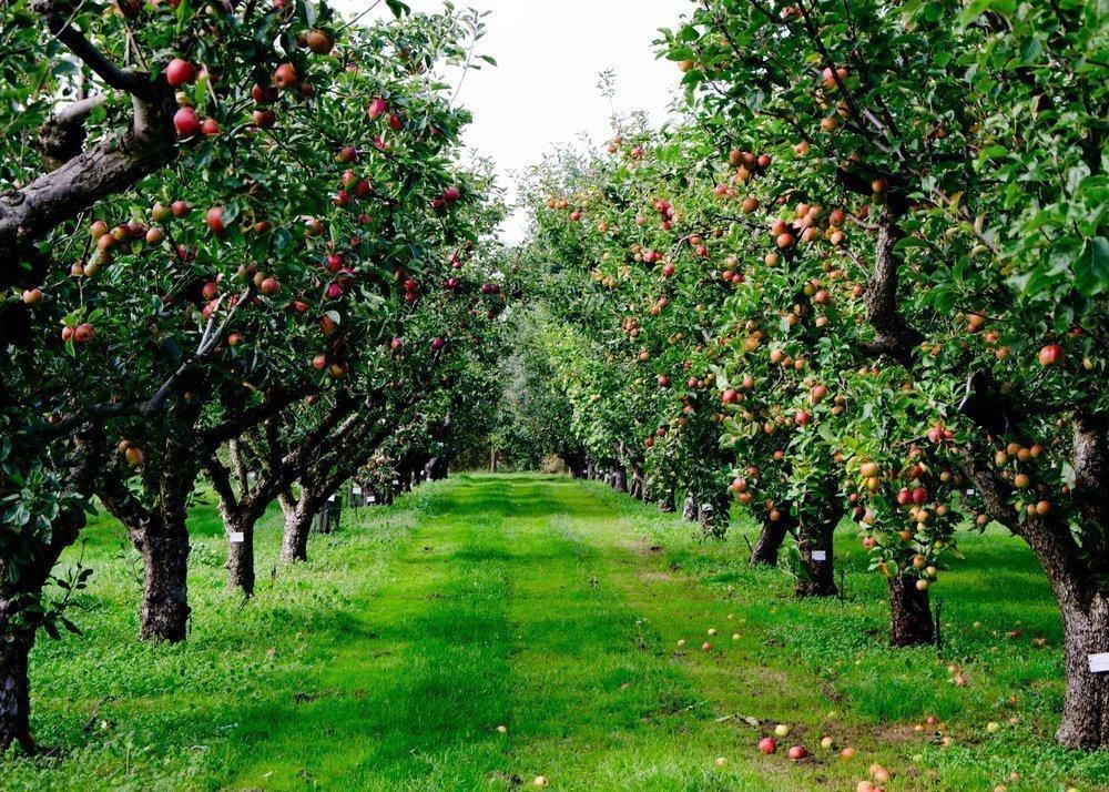 Миф №1. Органические продукты выращиваются без пестицидов
