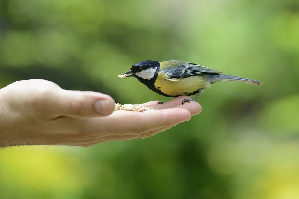Как предотвратить заражение от контакта с уличными птицами?
