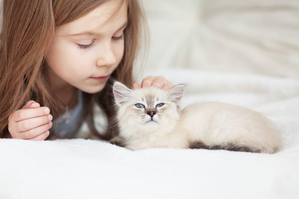 Допустимы ли домашние животные для детей с аллергией?
