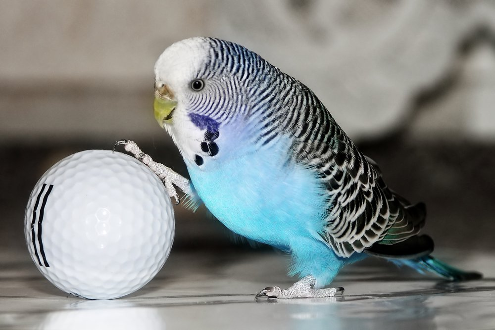 Опасная птичья инфекция — орнитоз