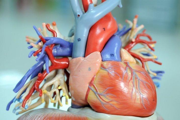 Риски развития болезней сердца