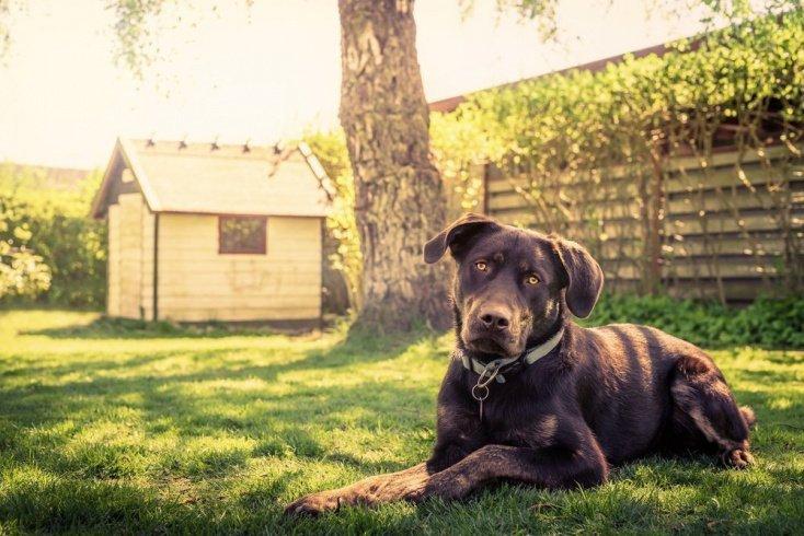 Опасности, связанные с собаками: паразиты и инфекции