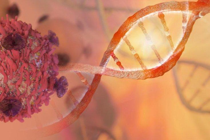 Рак и тело человека