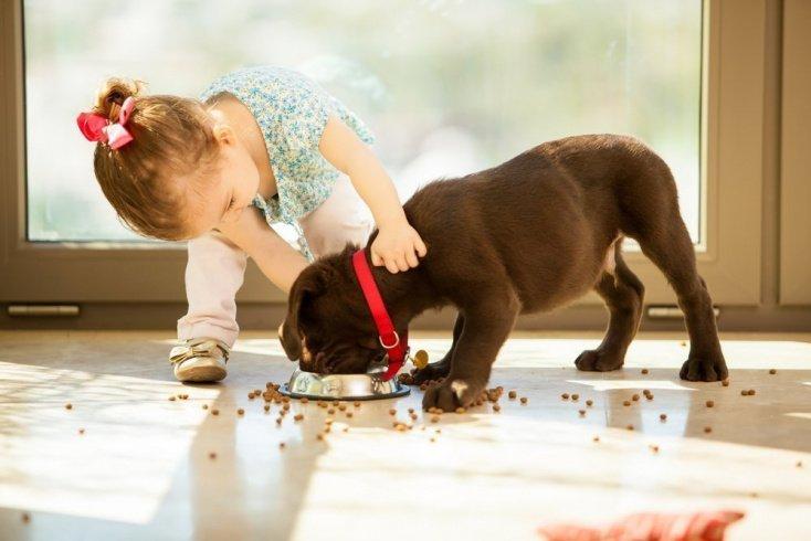 Почему ребенок хочет завести домашнее животное?