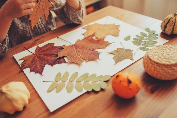 Оформление гербария: добрая память о детстве