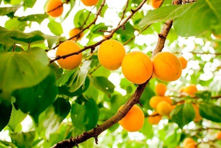 Здоровое питание с сочным фруктом