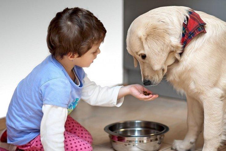 В чем заключается польза общения ребенка с домашними питомцами?