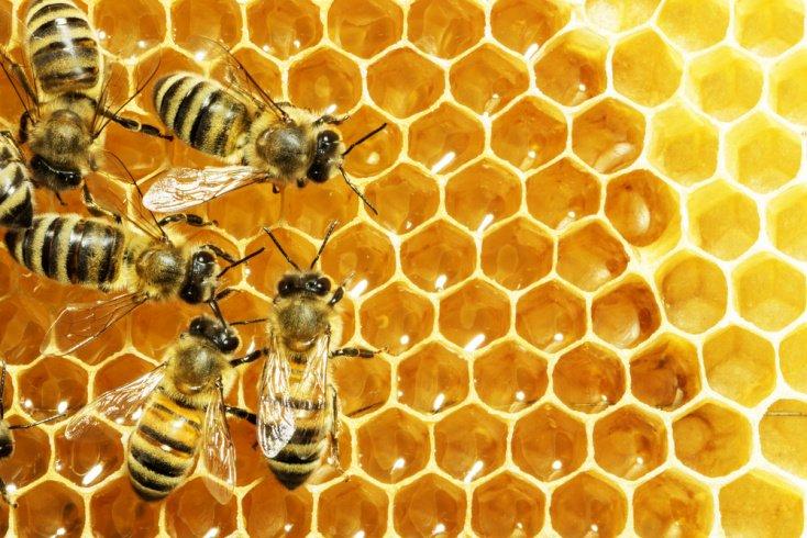 Апитерапия – лечение продуктами жизнедеятельности пчел