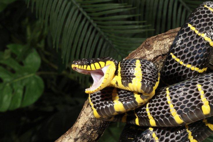 Миф №3. По рисунку на теле змеи можно точно определить: ядовитая она или нет