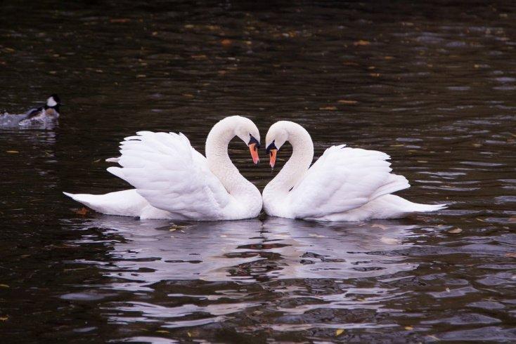 Моногамные отношения среди животных