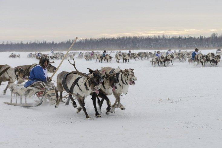 Вспышка сибирской язвы 2016 года Источник: Vladimir Kovalchuk / Shutterstock.com