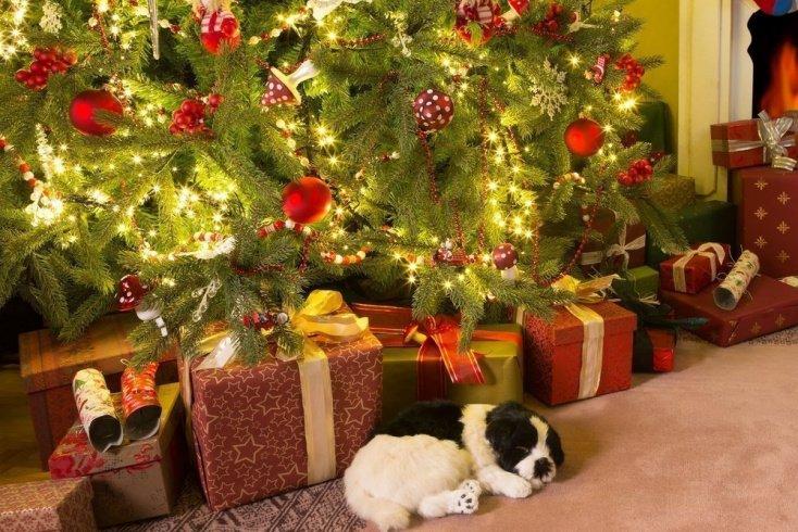 Правда о Деде Морозе: так кто же приносит подарки?