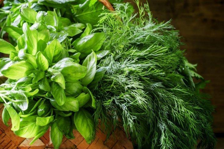 Семена иных растений в профилактике и лечении: советы врача