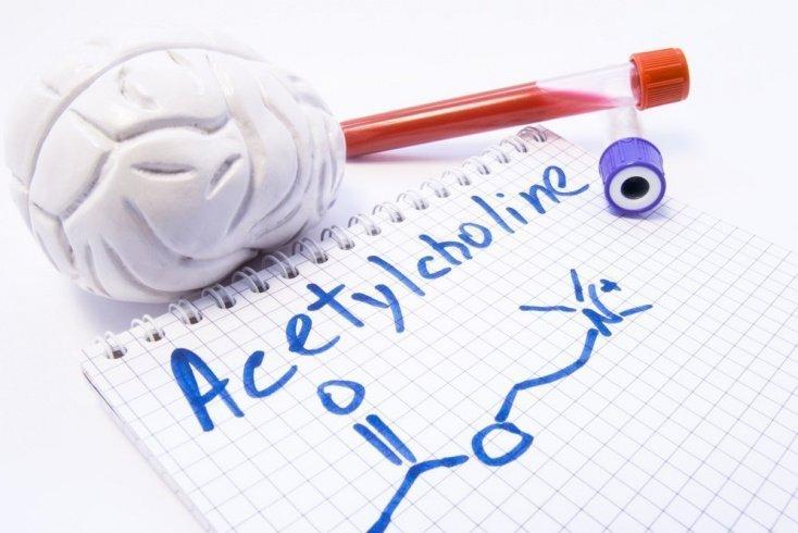 Ацетилхолин и рецепторы