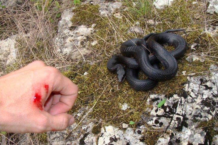 Миф №1. Все змеи стремятся кого-нибудь укусить