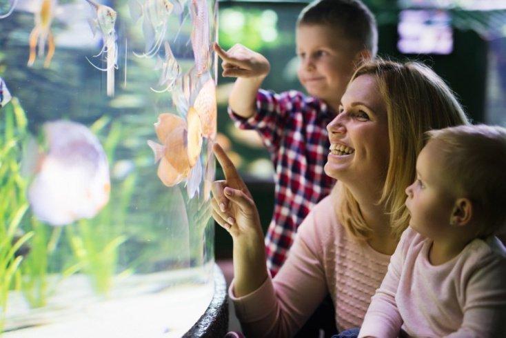Нужно ли родителям помогать ухаживать за аквариумом?