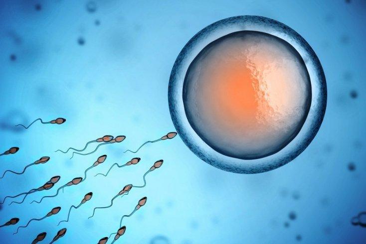 Какие показатели спермы важны для зачатия?