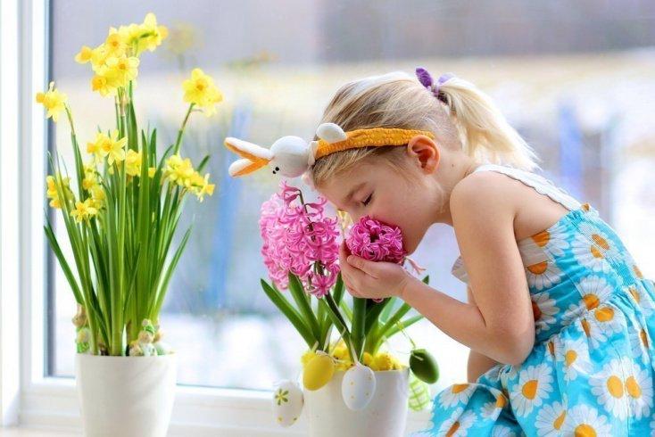Комнатные растения — польза или вред?