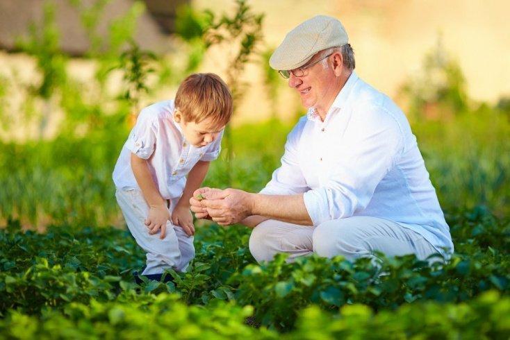 Сад и огород — вот как все растет на самом деле