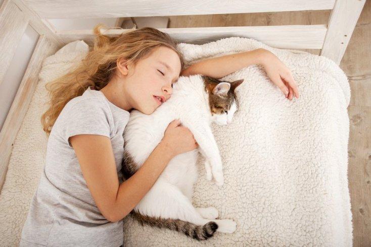 Развитый, подвижный ребенок прекрасно поладит с кошкой