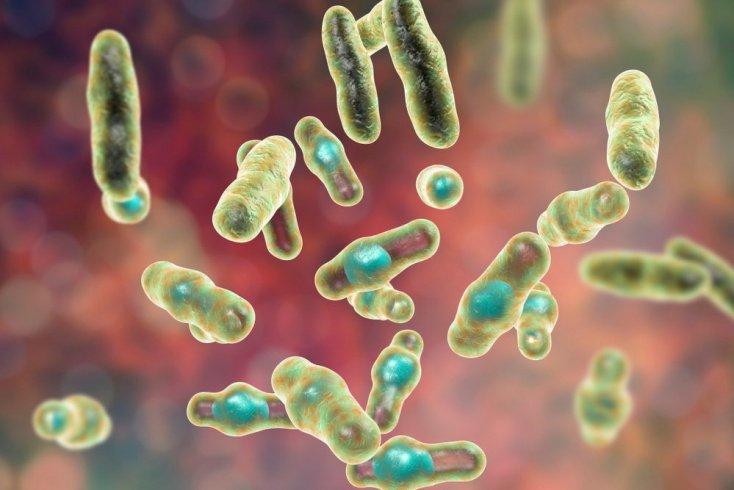 Что такое газовая гангрена и какие бактерии ее вызывают?