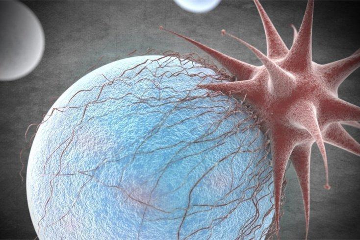 Вирус: неклеточный инфекционный агент