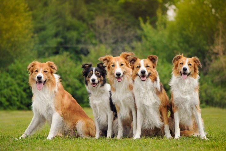 Миф об особом строении шерсти собак