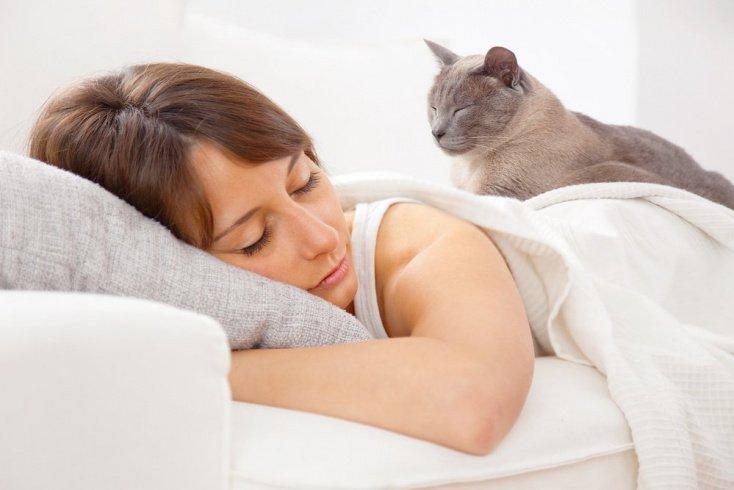 Что еще умеют кошки?