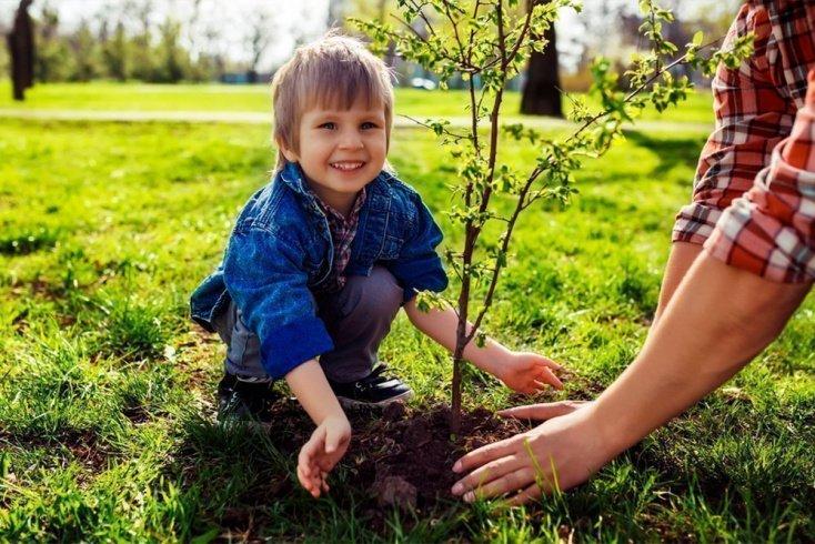 5. Посадите вместе с ребенком дерево