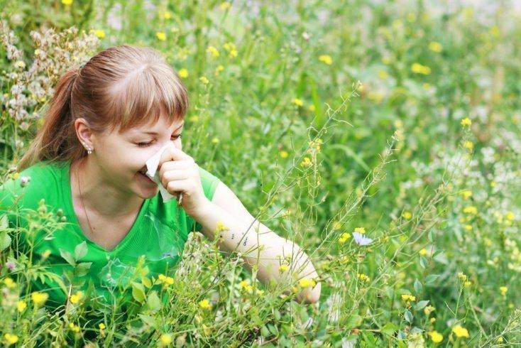 Полынь и аллергия