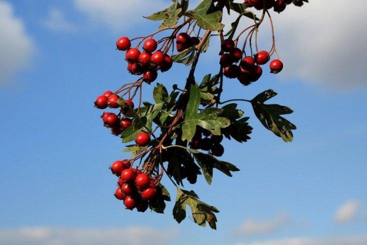 Какие плоды заготавливать в конце лета?