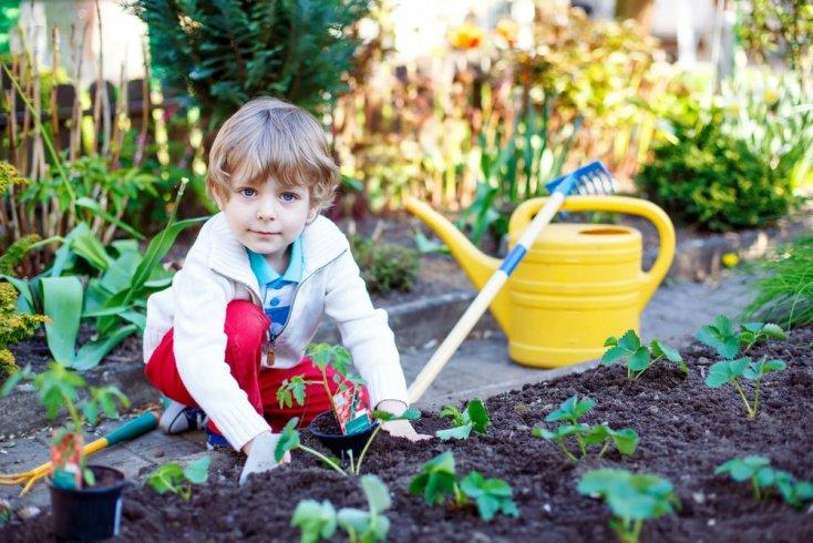 Как выбрать растения для детей?