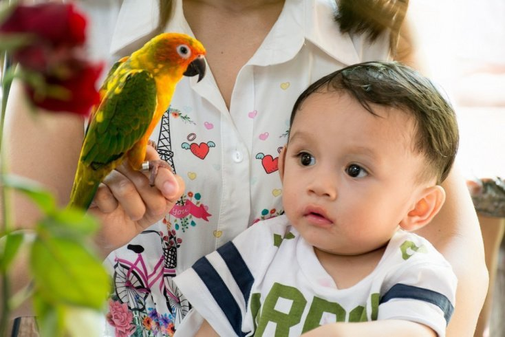 Почему у детей нет любви к животным?