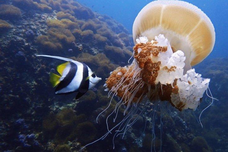 Укус медузы на отдыхе