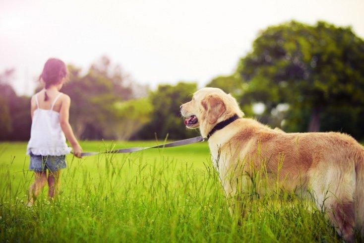 Польза животных для психики ребенка
