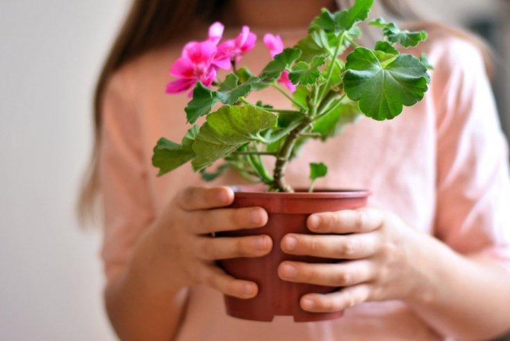 Какие цветы можно доверить малышам