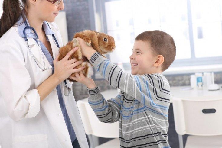 Безопасное развитие ребенка: советы врача для контактов с животными