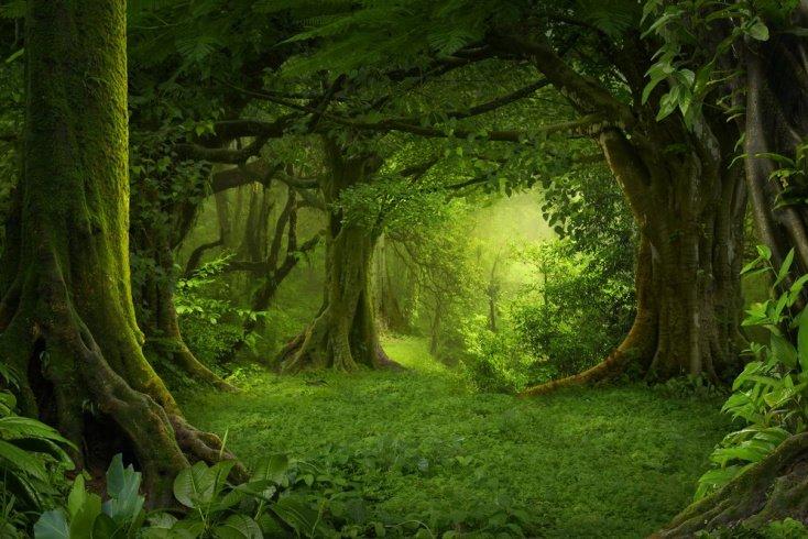 Лесные испытания у кельтов
