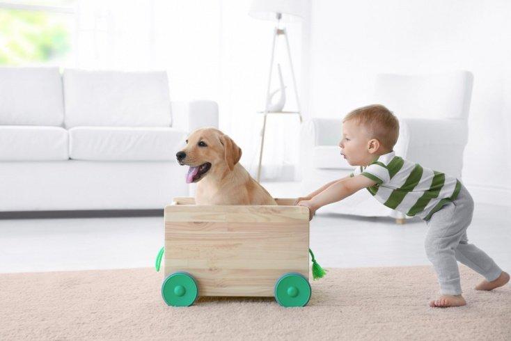 Профилактика токсокароза: владельцам собак!
