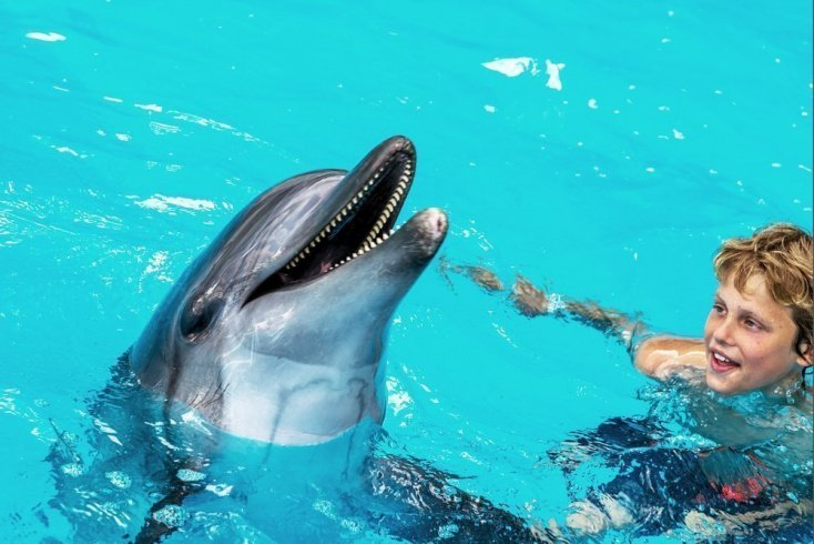 Чем может помочь дельфинотерапия: ДЦП, аутизм и другое