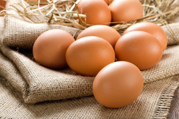 Яйца и бактерии сальмонеллы
