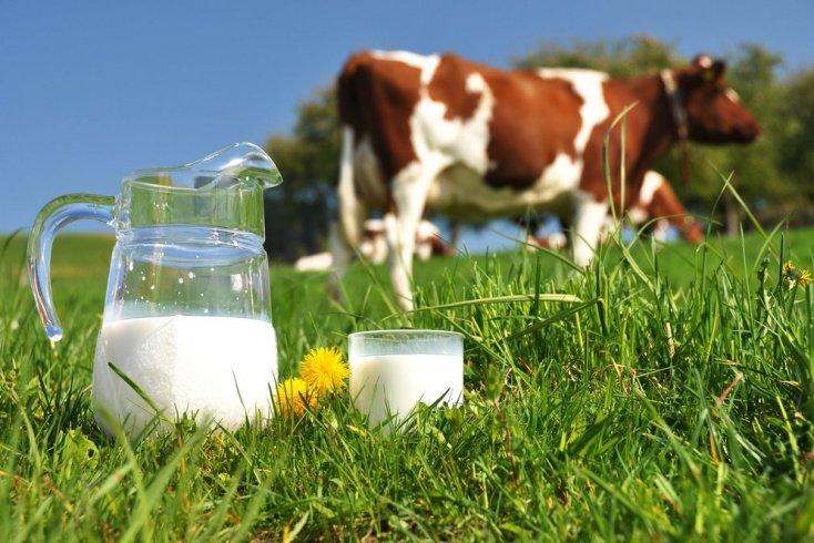 Коровы и казеины