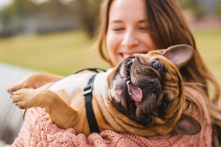 Собака уже есть дома: информация для родителей