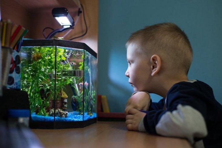В чем польза аквариума для детей?